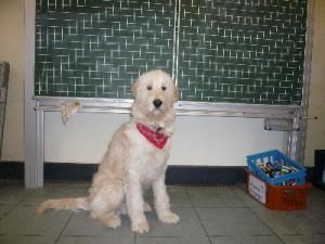 Erni - unser Schulhund